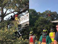 Nekat Terjun Payung Sendiri Wanita Ini Tersangkut di Pohon 3 Jam