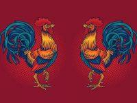 Ilustrasi Judi Sabung Ayam