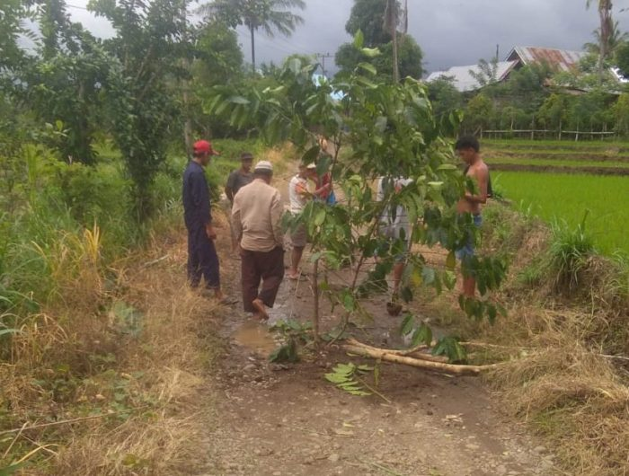 Kondisi jalan di Dusun Galunglohe, Desa Tammaona, Kecamatan Kindang, Bulukumba setelah ditanami pohon oleh warga, Kamis (7/2/2019).
