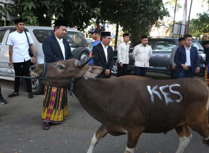Pemkot Makassar Sembelih 9 Ekor Hewan Kurban