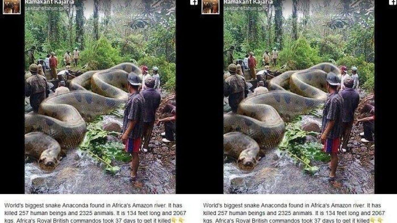 Fakta Baru Ular Piton Raksasa Bunuh 257 Manusia Di Amazon Yang Viral 4 Tahun Lalu Panrita News