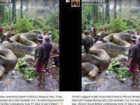 Fakta Baru Ular Piton Raksasa Bunuh 247 Manusia di Amazon yang Viral 4 Tahun Lalu
