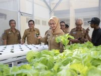 Bupati Luwu Utara, Indah Putri Indriani memanen sayur tanaman hidropolik di Halaman Kantor BKPSDM