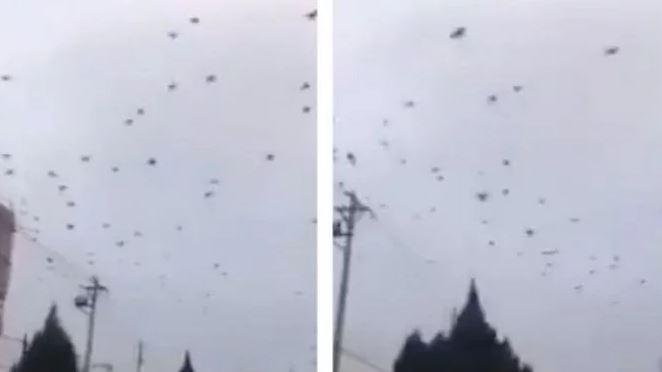 Viral Ribuan Burung Gagak Serbu Kota Wuhan China, Tempat Pertama Virus Corona Muncul