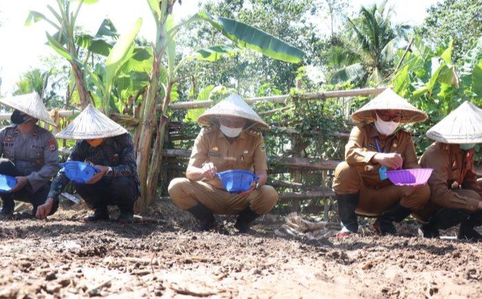 Bupati Barru Genjot Penanaman Bawang Merah di Era New Normal