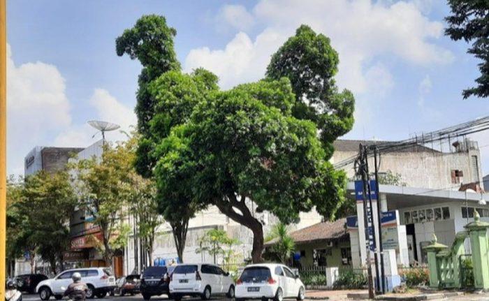 Viral Pohon Berbentuk Menyerupai Ayam, Banyak yang Tak Sadar