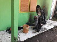 Alumni IPMIL Minta Polisi Usut Pelaku Penyerangan Asrama Mahasiswa Luwu