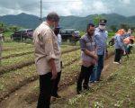 Hortikultura Jadi Sektor Primadona di Sinjai Barat